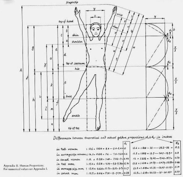 golden ratio in the human body We can find the golden ratio in the human body allmost everywhere , from our  faces to our arms to proportions of our body with each other, in our hands even in .